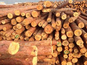落叶松木桩,小圆木,装饰木,景观装修,木桩,上海尧瑞实业
