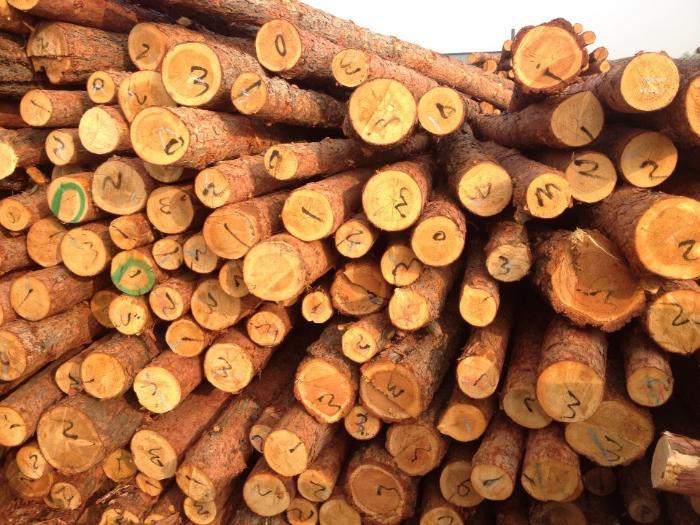 商品详情-落叶松木桩,小圆木