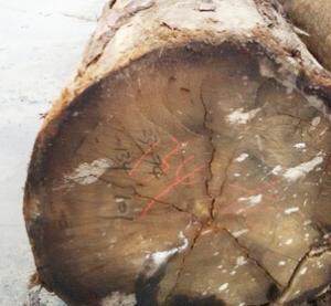 全网热销高档剥皮桉材高档雕刻防虫底座木板木方压条质量保证批发