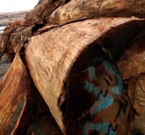 高档优质蒲桃木材 高档材料 雕刻防虫底座 木板 质量保证特价批发
