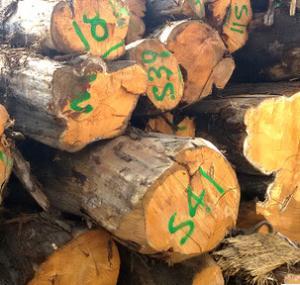 厂家直销 优质精品 柏木桧木 高档木质材料 雕刻防虫 底座木板