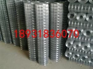 优质不锈钢电焊网&耐腐蚀不锈钢电焊网&圈玉米电焊网