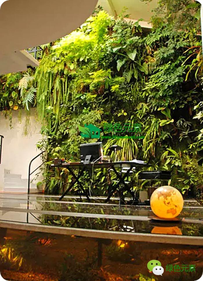 固定植物墙