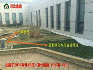 出口种植岩棉屋顶绿化岩棉降低浮尘净化空气
