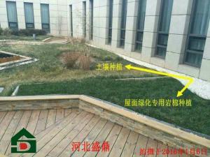 出口种植岩棉屋顶绿化岩棉提高城市绿化率