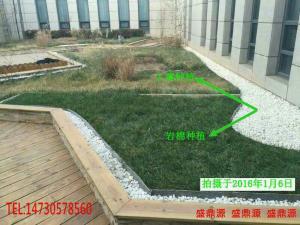 出口种植岩棉屋顶绿化岩棉改善身心健康
